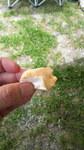 グリム冒険の森で燻製料理:カマンベールチーズ